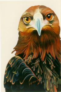 Surreal Golden Eagle Oil Richard Montross