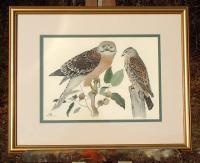 Rex Brasher Lithograph Print Red Shouldered Hawk