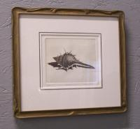 Dell Weller limited edition etching of a shell  titled Murex 6 out of 150