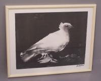 Pablo Picasso lithograph of Dove c1969