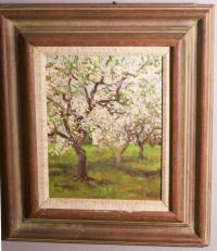 Bernard Lennon apple trees in blossom Conn c1960