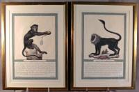 French monkey engravings Jacques de Seve c1749