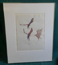 John W Mills signed Birds of prey watercolor c1976