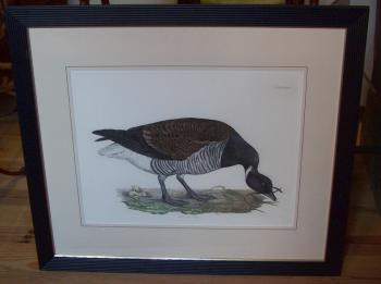 Image of Brendt Bernicle copper plate goose etching XLV by John Selby